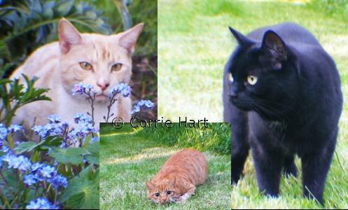 Cat Photos - May 2013